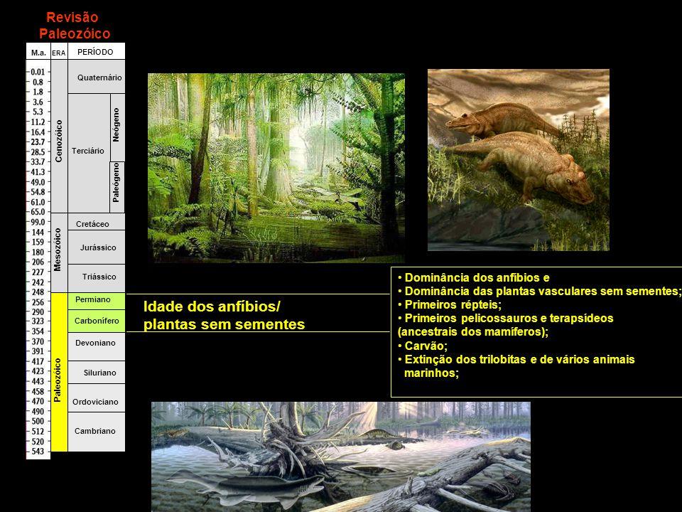Idade dos anfíbios/ plantas sem sementes Revisão Paleozóico