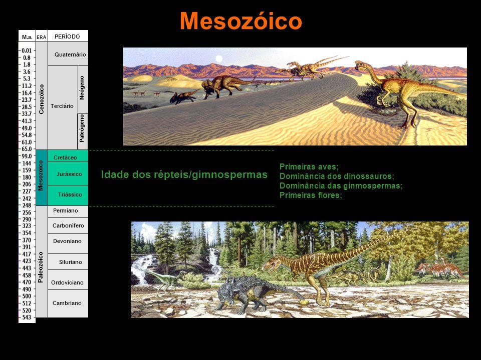 Mesozóico Idade dos répteis/gimnospermas Primeiras aves;