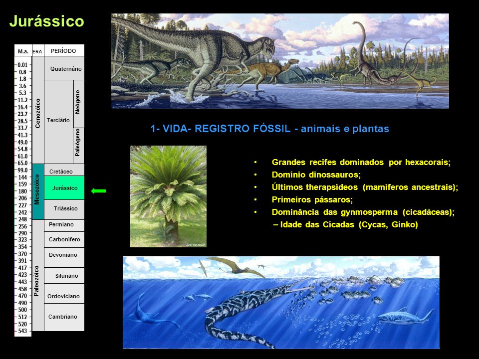 1- VIDA- REGISTRO FÓSSIL - animais e plantas