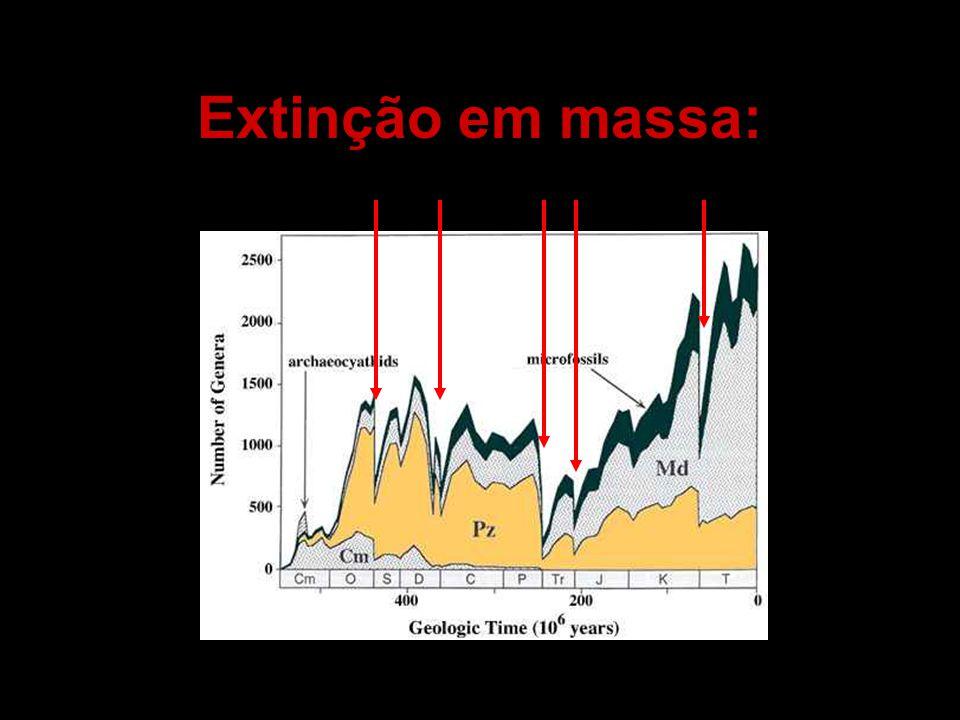 Extinção em massa: