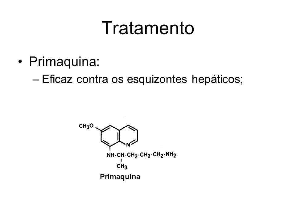 Tratamento Primaquina: Eficaz contra os esquizontes hepáticos;