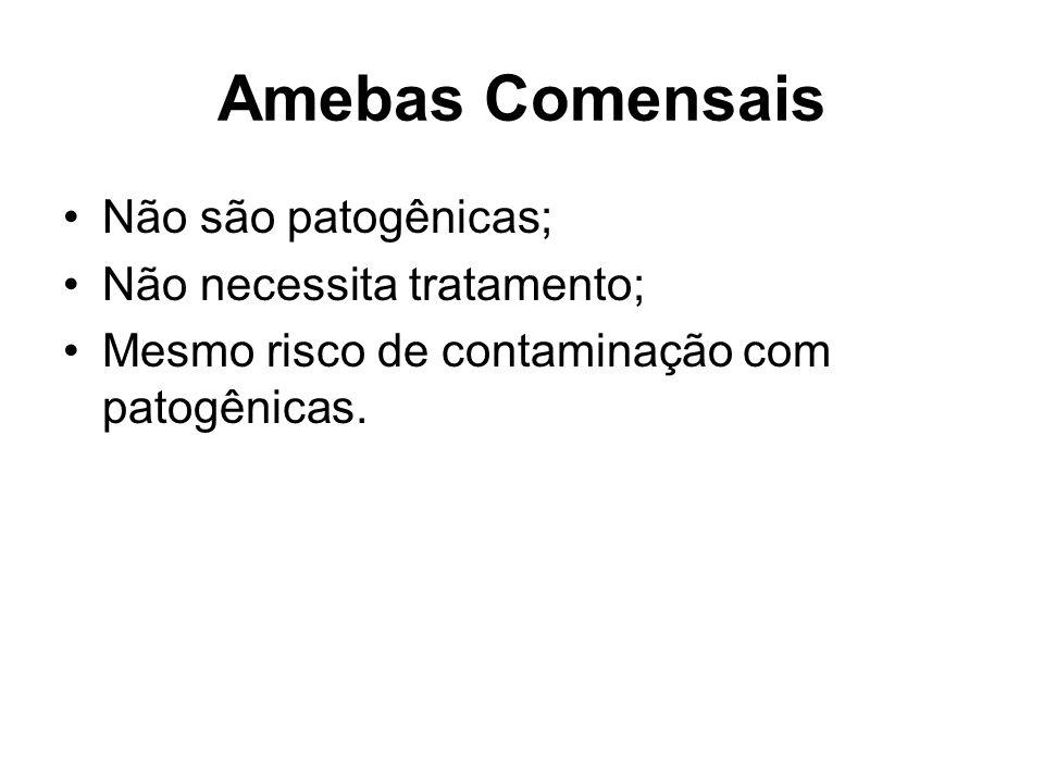 Amebas Comensais Não são patogênicas; Não necessita tratamento;