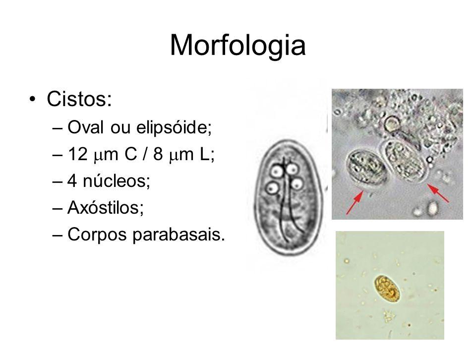 Morfologia Cistos: Oval ou elipsóide; 12 mm C / 8 mm L; 4 núcleos;