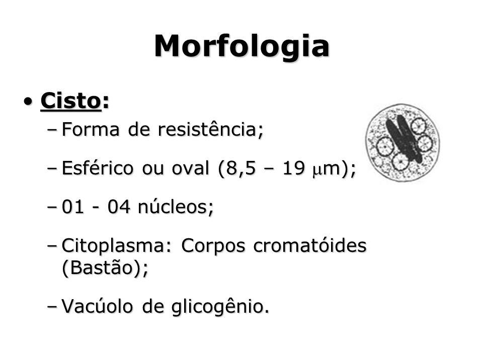 Morfologia Cisto: Forma de resistência;