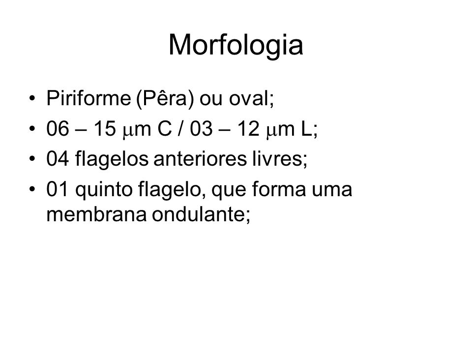 Morfologia Piriforme (Pêra) ou oval; 06 – 15 mm C / 03 – 12 mm L;