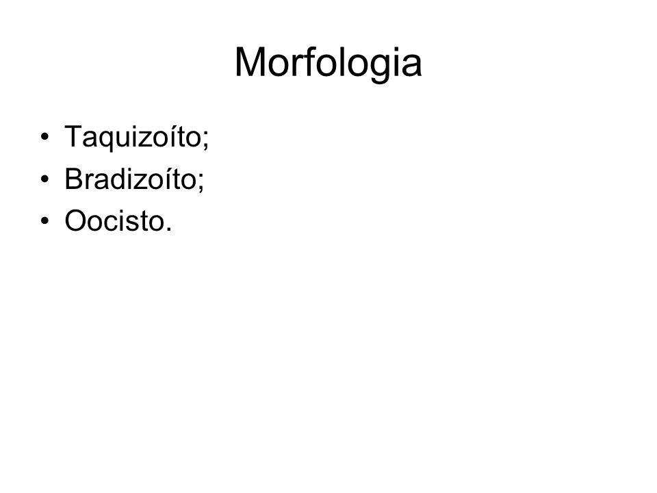 Morfologia Taquizoíto; Bradizoíto; Oocisto.