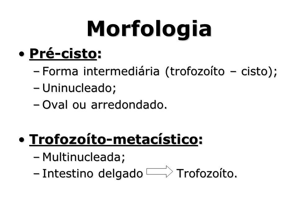 Morfologia Pré-cisto: Trofozoíto-metacístico:
