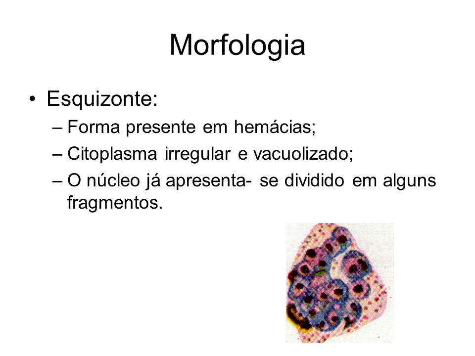 Morfologia Esquizonte: Forma presente em hemácias;
