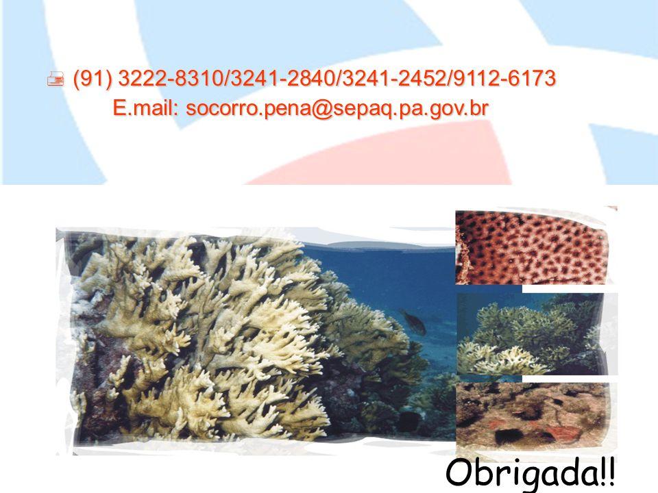 E.mail: socorro.pena@sepaq.pa.gov.br
