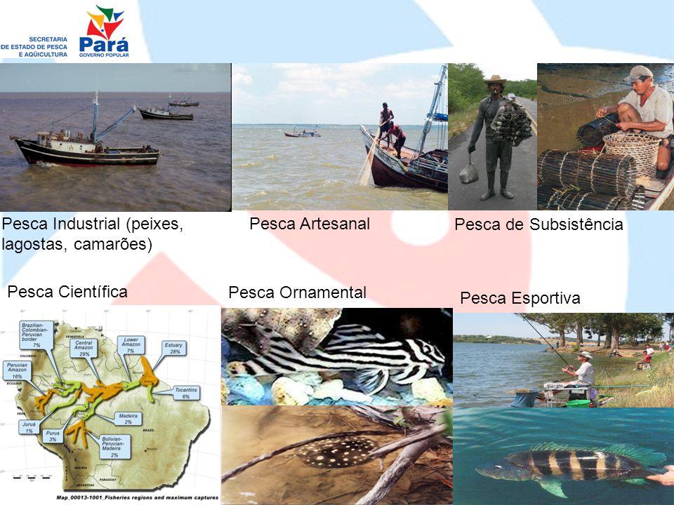 Pesca Industrial (peixes, lagostas, camarões)