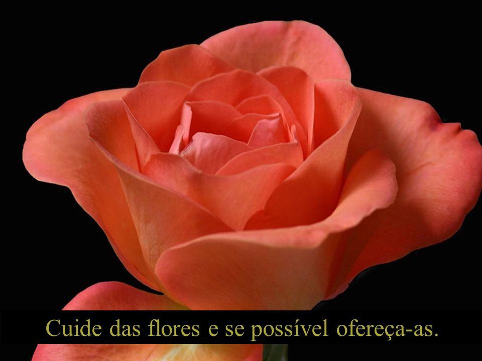 Cuide das flores e se possível ofereça-as.