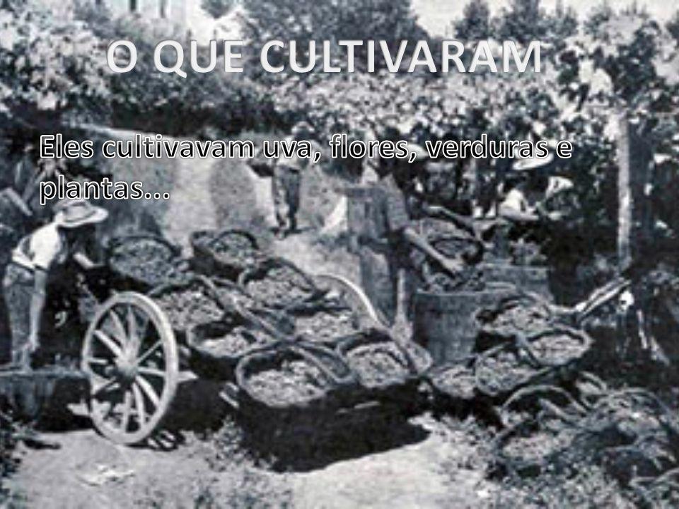 O QUE CULTIVARAM Eles cultivavam uva, flores, verduras e plantas...