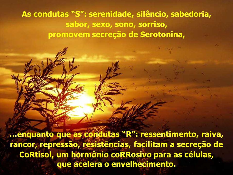 As condutas S : serenidade, silêncio, sabedoria,
