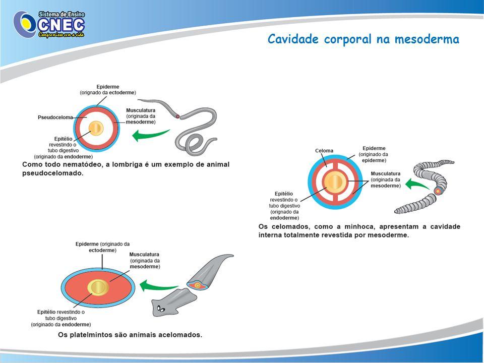 Cavidade corporal na mesoderma