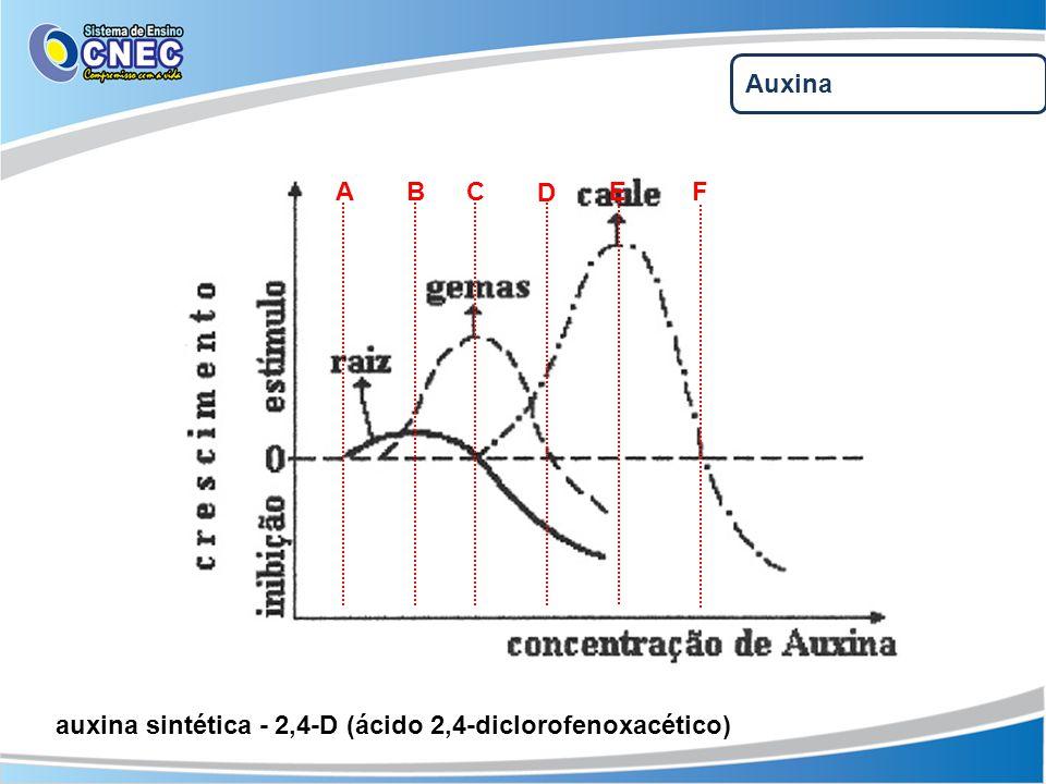 Auxina A B C D E F auxina sintética - 2,4-D (ácido 2,4-diclorofenoxacético)