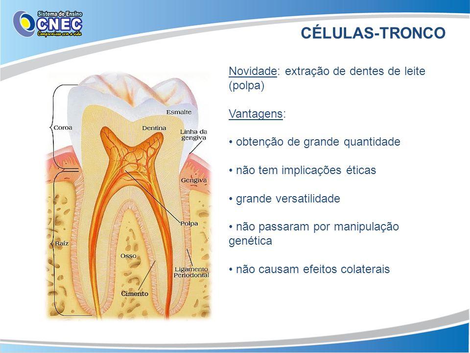 CÉLULAS-TRONCO Novidade: extração de dentes de leite (polpa)