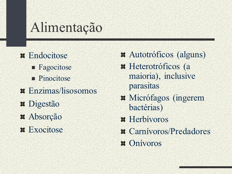 Alimentação Endocitose Enzimas/lisosomos Digestão Absorção Exocitose