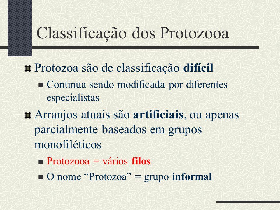 Classificação dos Protozooa