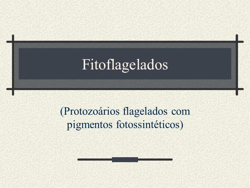 (Protozoários flagelados com pigmentos fotossintéticos)