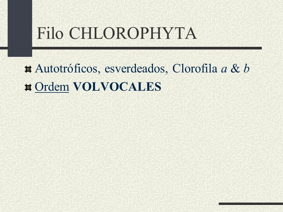 Filo CHLOROPHYTA Autotróficos, esverdeados, Clorofila a & b