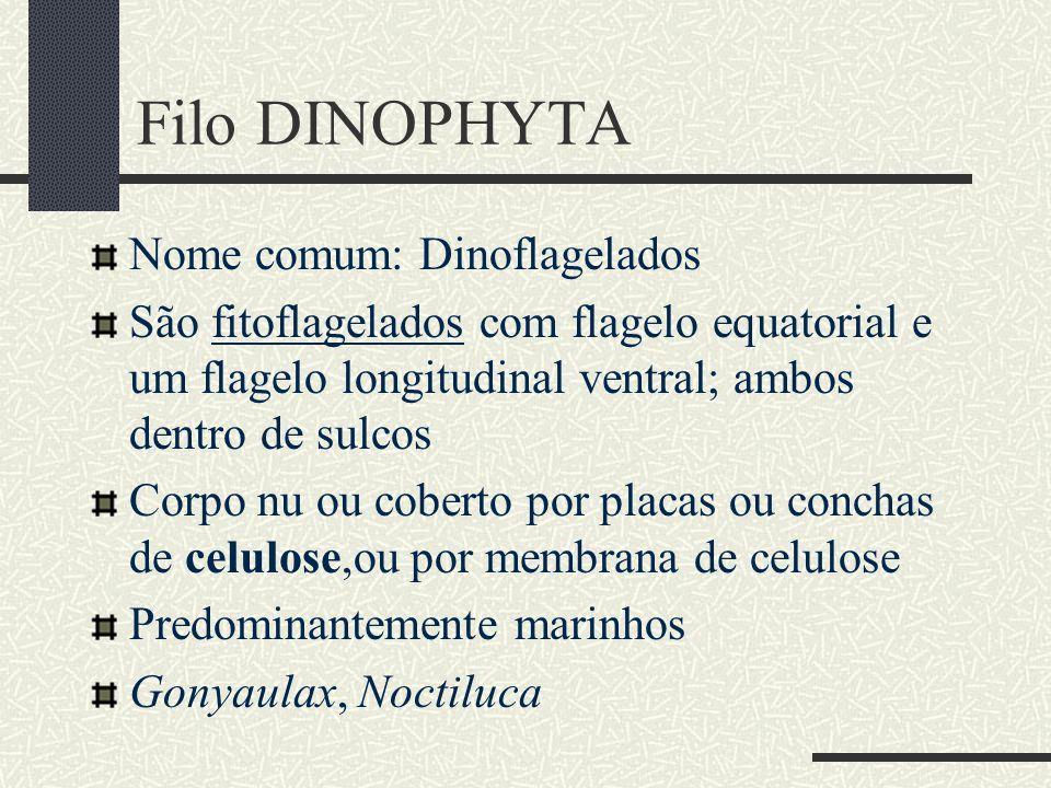 Filo DINOPHYTA Nome comum: Dinoflagelados