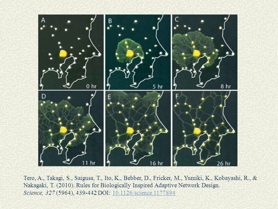 Tero, A., Takagi, S., Saigusa, T., Ito, K., Bebber, D., Fricker, M., Yumiki, K., Kobayashi, R., &