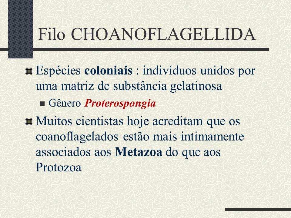 Filo CHOANOFLAGELLIDA