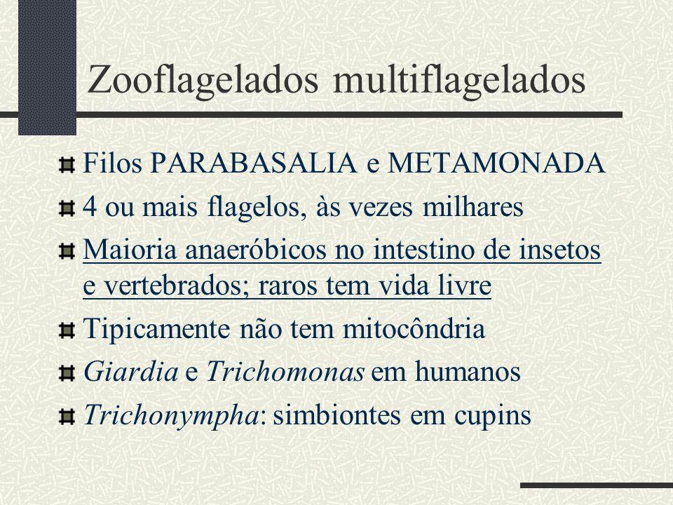 Zooflagelados multiflagelados