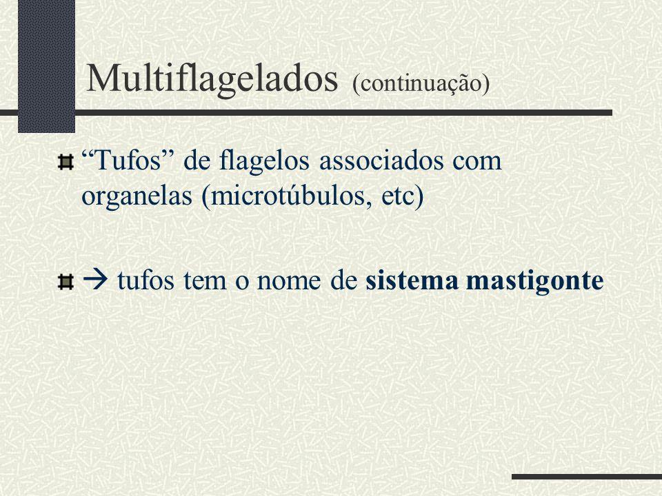 Multiflagelados (continuação)