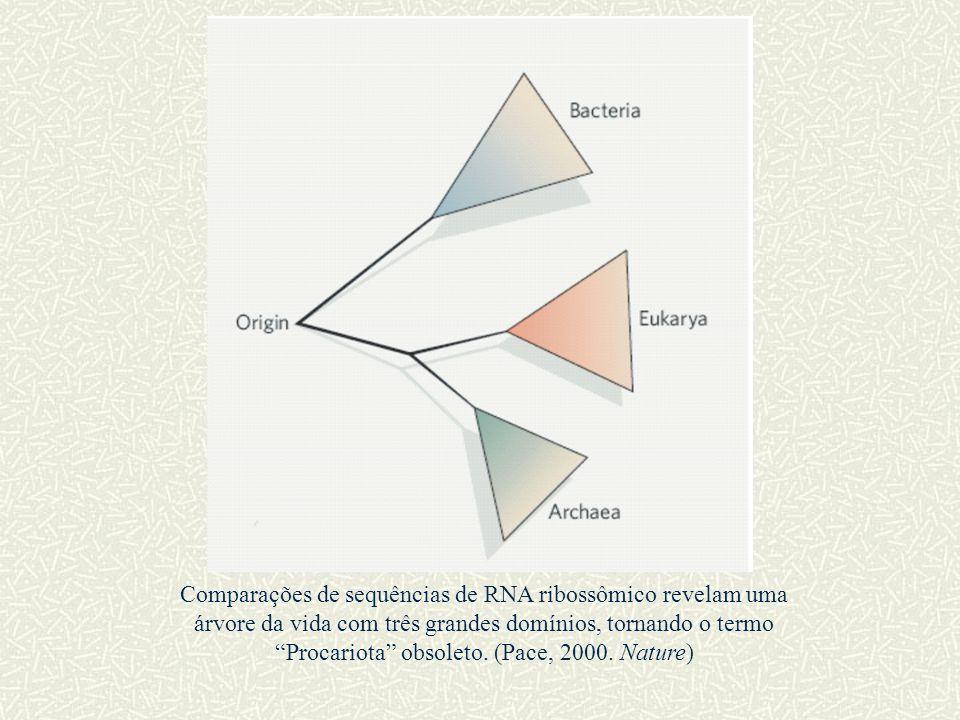 Comparações de sequências de RNA ribossômico revelam uma