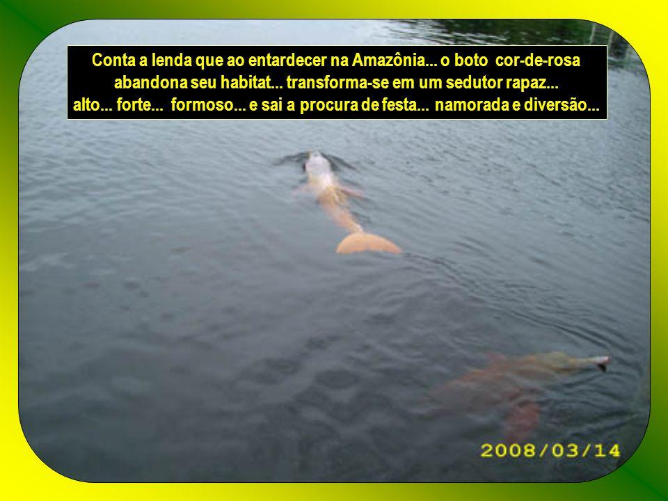 Conta a lenda que ao entardecer na Amazônia... o boto cor-de-rosa