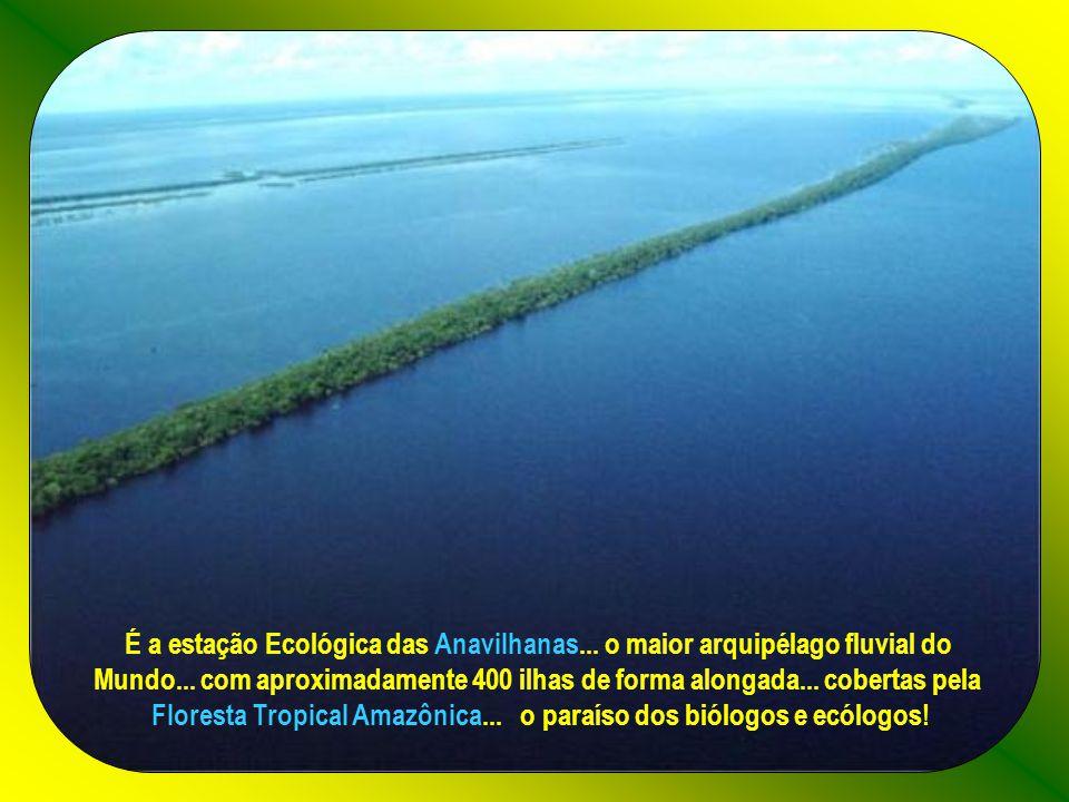 Floresta Tropical Amazônica... o paraíso dos biólogos e ecólogos!