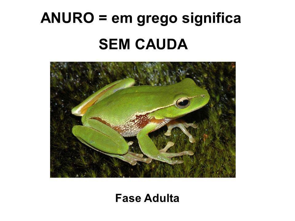 ANURO = em grego significa