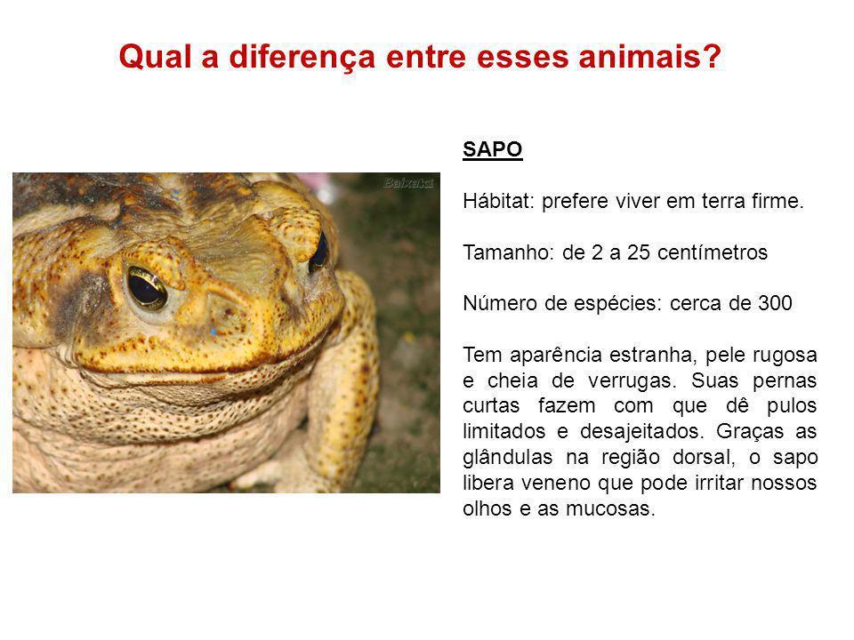 Qual a diferença entre esses animais