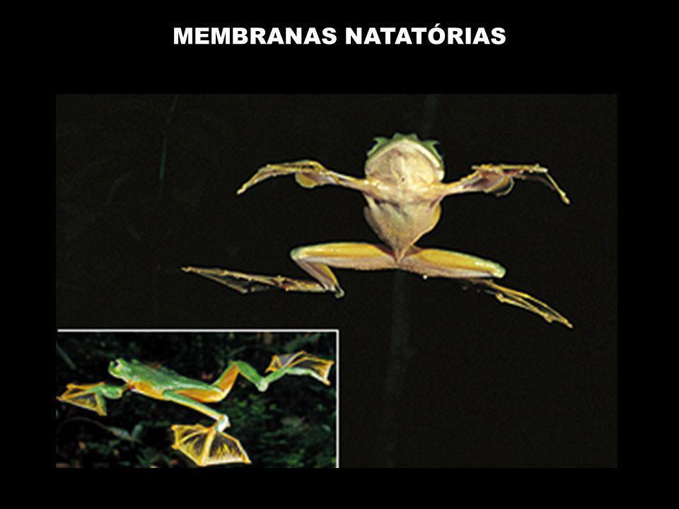 MEMBRANAS NATATÓRIAS