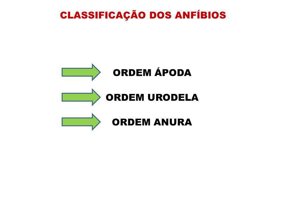 CLASSIFICAÇÃO DOS ANFÍBIOS