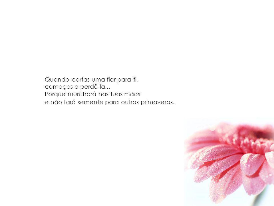 Quando cortas uma flor para ti, começas a perdê-la