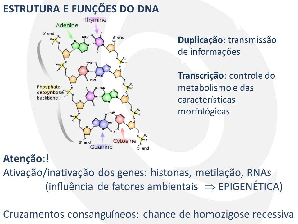 ESTRUTURA E FUNÇÕES DO DNA