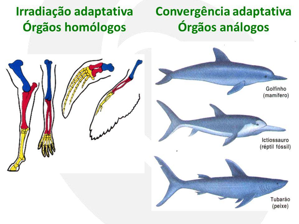 Irradiação adaptativa Convergência adaptativa