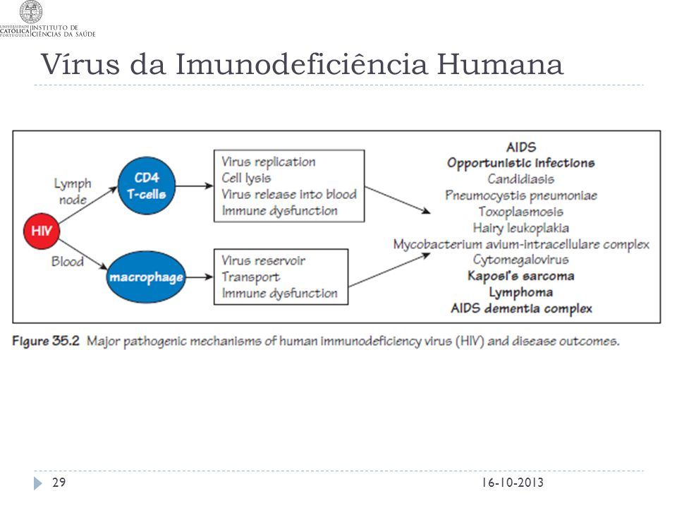 Vírus da Imunodeficiência Humana
