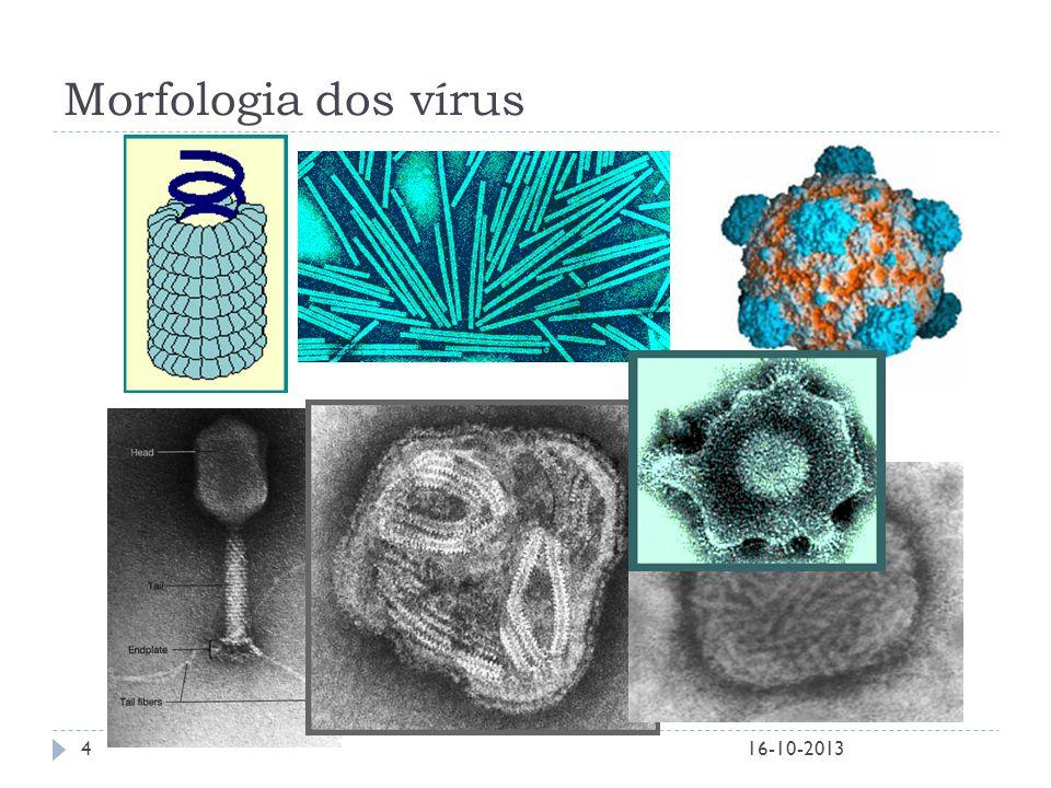 Morfologia dos vírus 16-10-2013