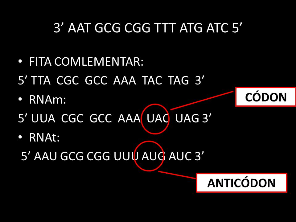 3' AAT GCG CGG TTT ATG ATC 5'