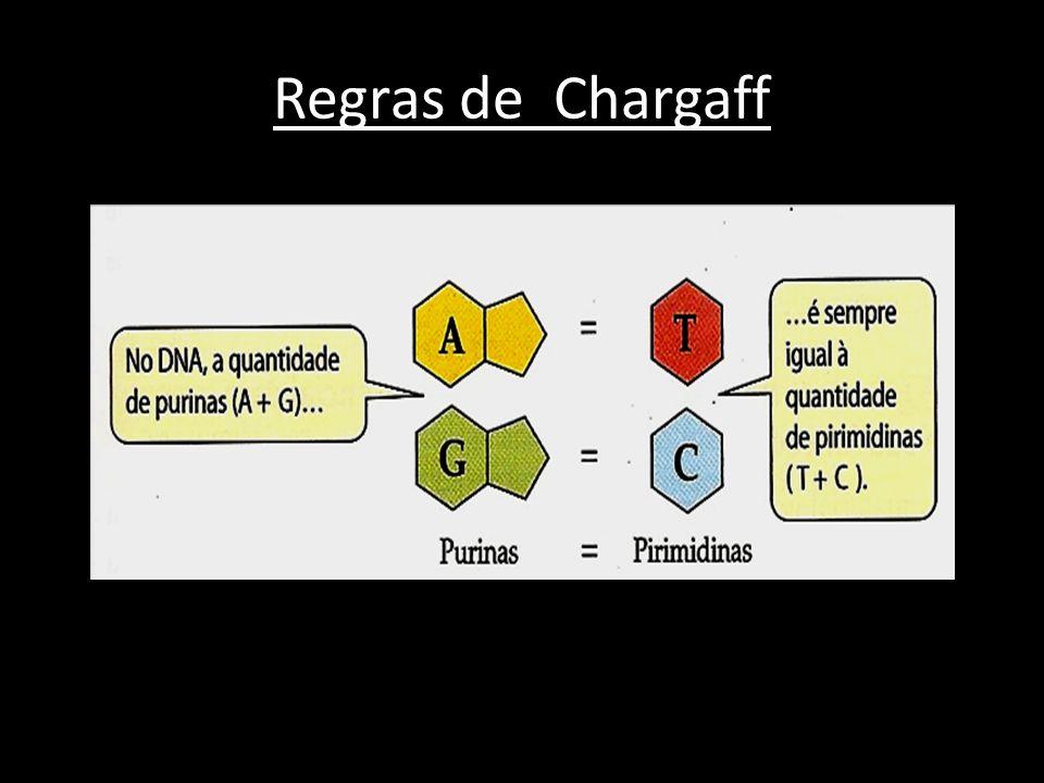 Regras de Chargaff