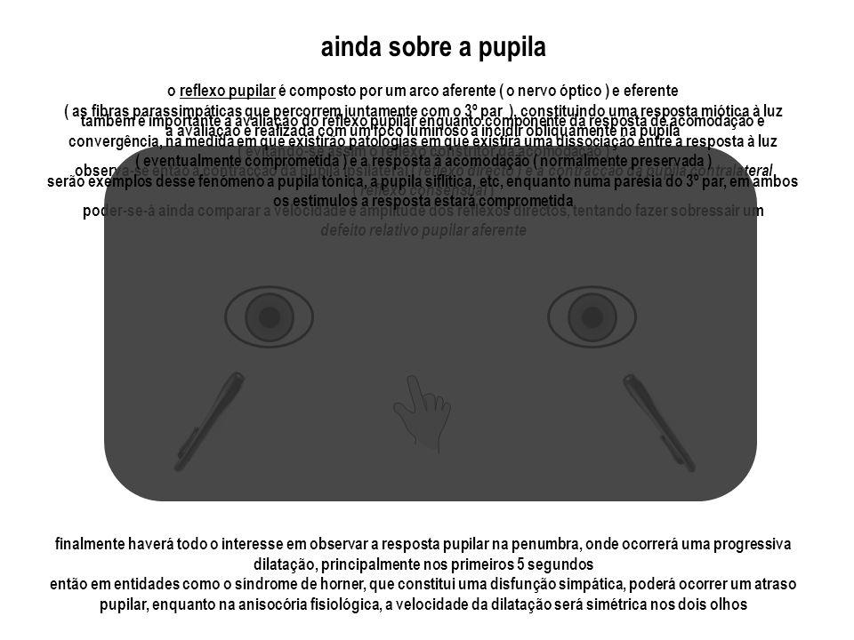 ainda sobre a pupila o reflexo pupilar é composto por um arco aferente ( o nervo óptico ) e eferente.