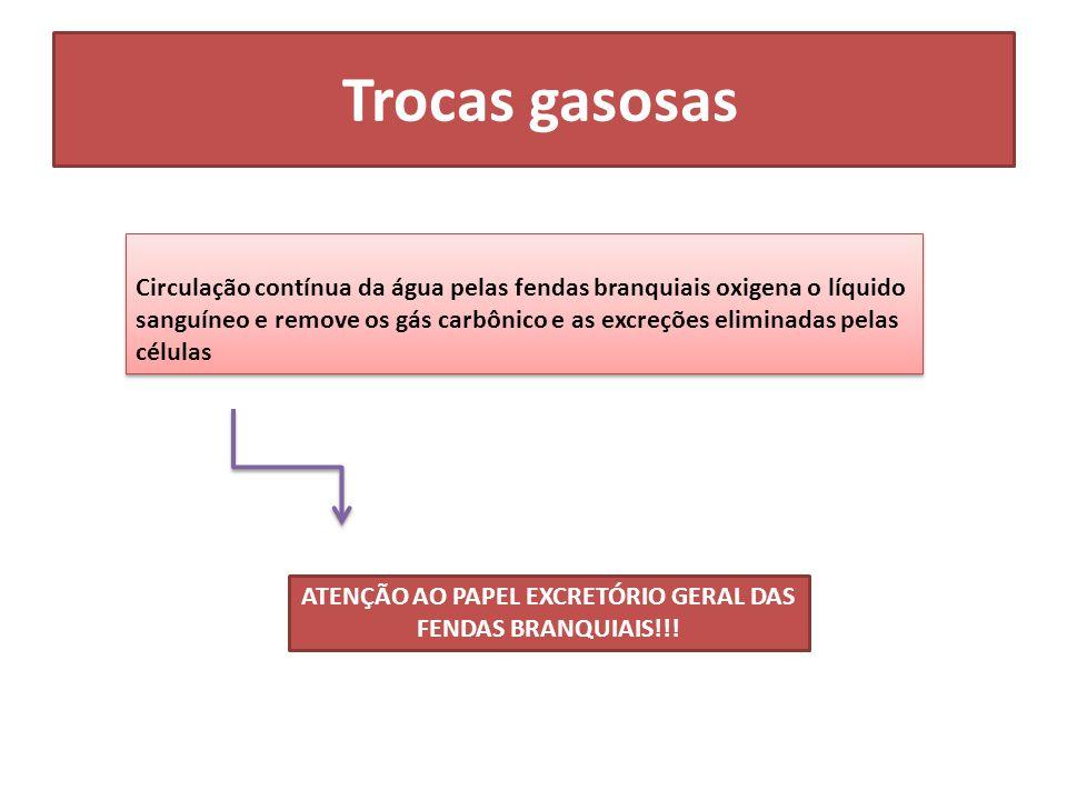 ATENÇÃO AO PAPEL EXCRETÓRIO GERAL DAS