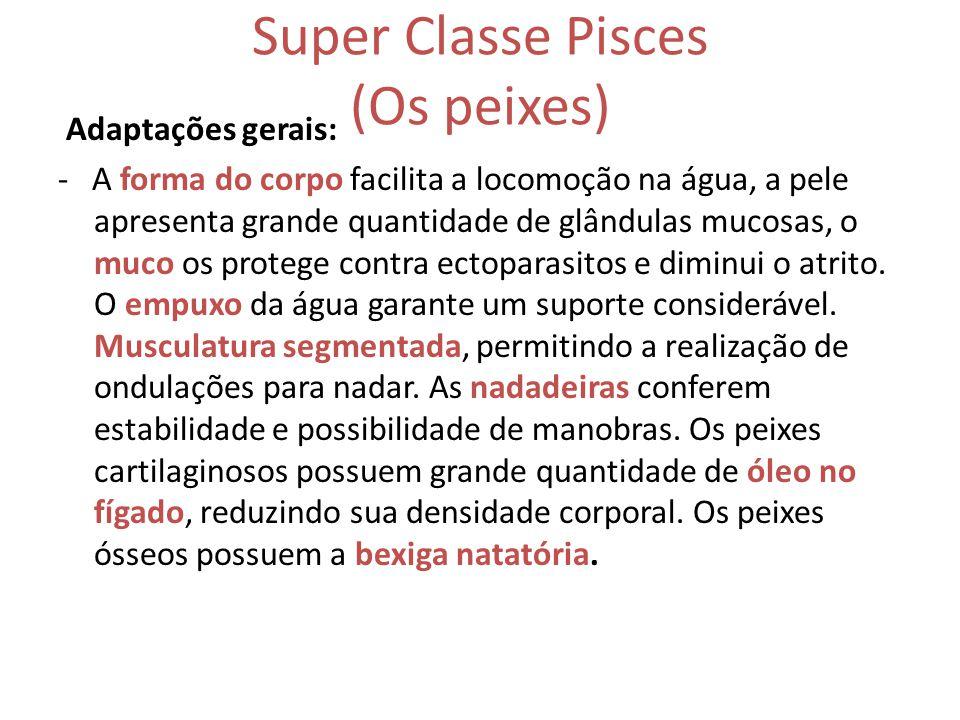 Super Classe Pisces (Os peixes)