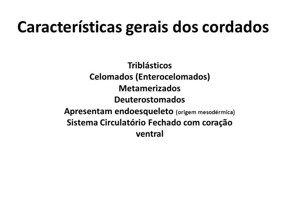 Características gerais dos cordados