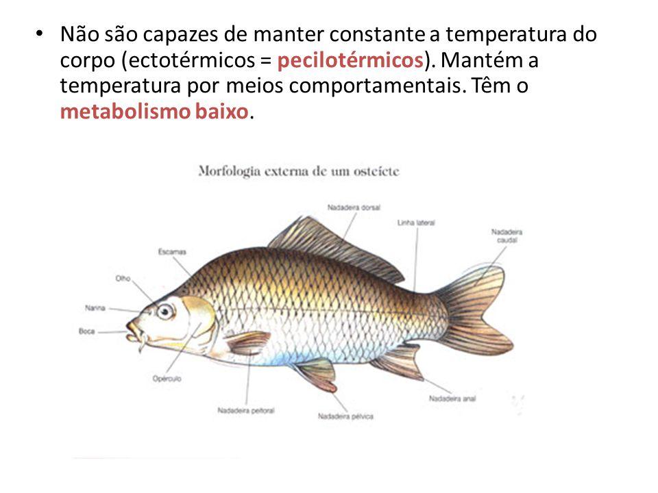 Não são capazes de manter constante a temperatura do corpo (ectotérmicos = pecilotérmicos).