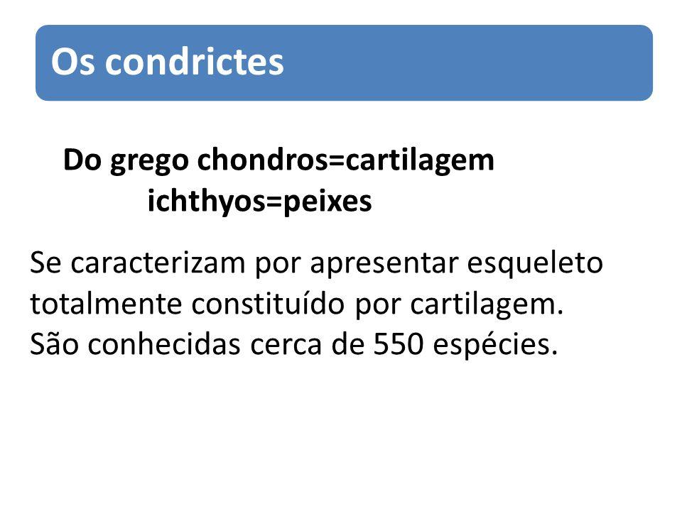 Do grego chondros=cartilagem ichthyos=peixes