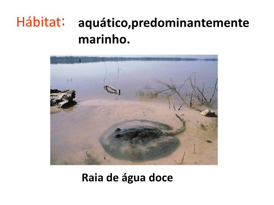 Hábitat: aquático,predominantemente marinho. Raia de água doce